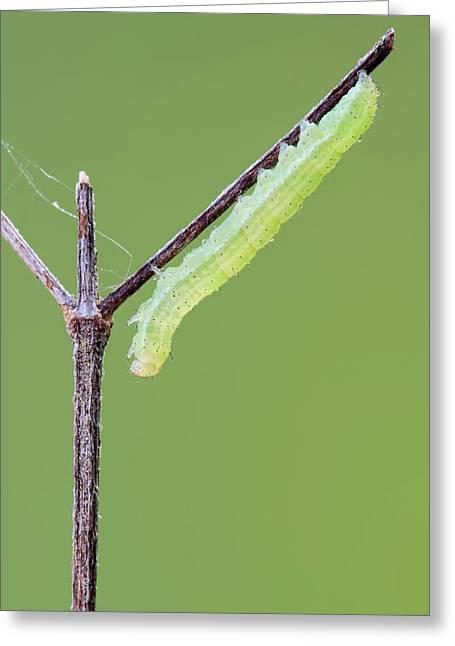 Caterpillar Greeting Card by Heath Mcdonald