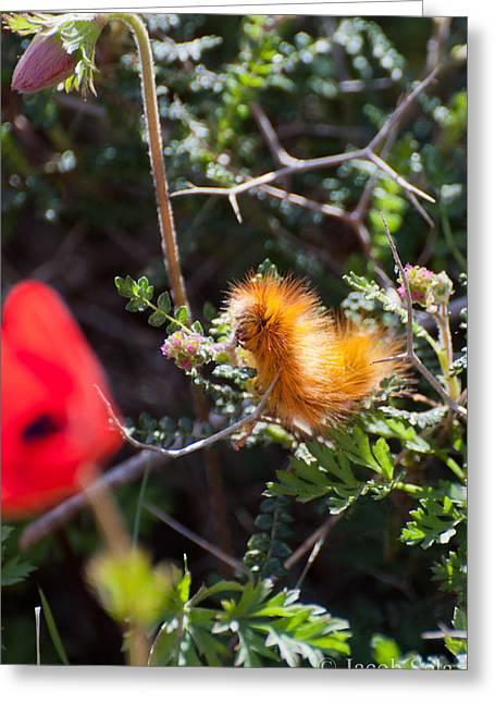 Fauna Pyrography Greeting Cards - Caterpillar Greeting Card by Jacob Sela