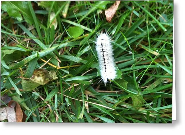 Caterpillar Greeting Card by Tina Nies