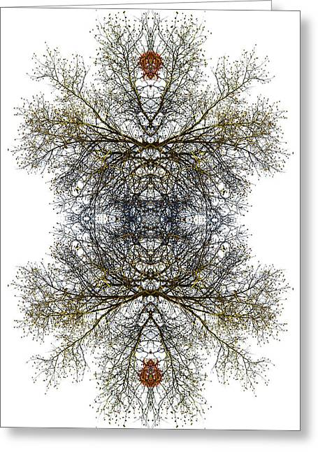 Lacy Fractal Greeting Cards - Cathedral Glass Greeting Card by Debra and Dave Vanderlaan