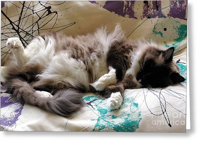 Futon Greeting Cards - Catnap Greeting Card by Nancy L Marshall