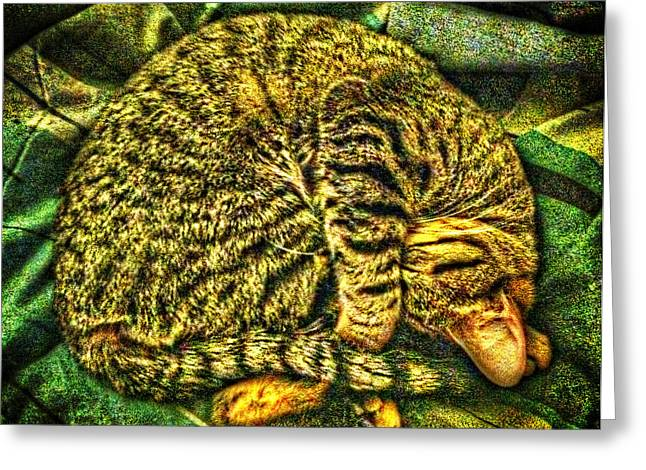 Arkansas Greeting Cards - Catnappin on a Cold Rainy Sunday Greeting Card by Randy Forrester