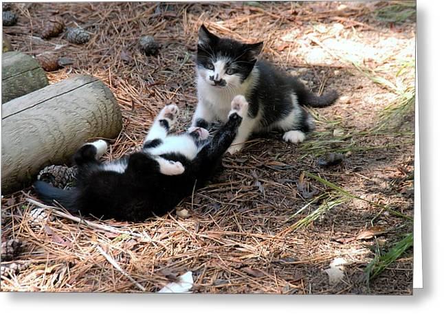 Kitten Prints Greeting Cards - Cats 51 Greeting Card by Joyce StJames