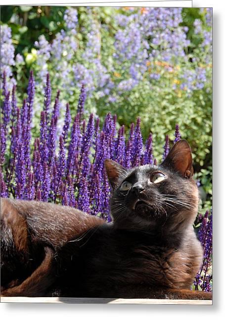 Kitten Prints Greeting Cards - Cats 56 Greeting Card by Joyce StJames