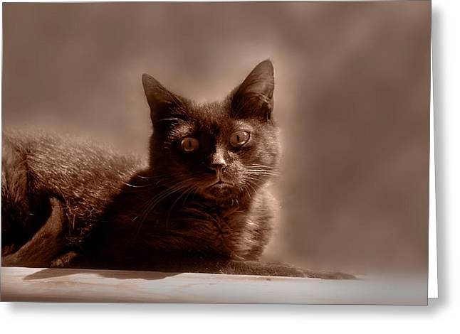 Litter Mates Photographs Greeting Cards - Cats 57 Greeting Card by Joyce StJames