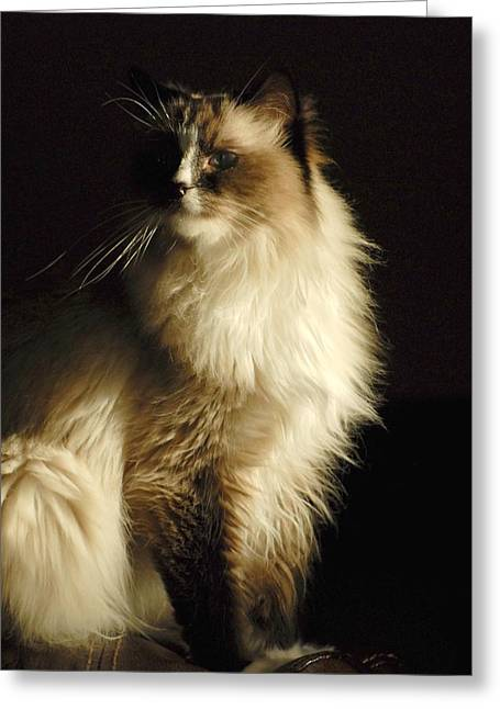 Litter Mates Greeting Cards - Cats 63 Greeting Card by Joyce StJames