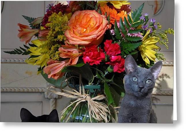 Cats 67 Greeting Card by Joyce StJames