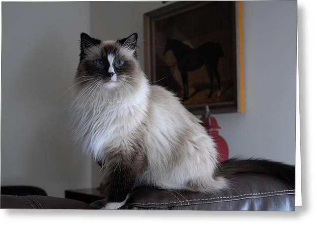 Cats 68 Greeting Card by Joyce StJames