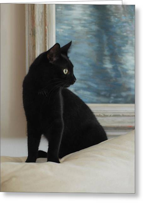 Litter Mates Photographs Greeting Cards - Cats 70 Greeting Card by Joyce StJames