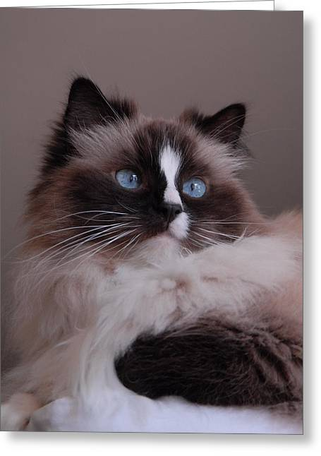 Litter Mates Photographs Greeting Cards - Cats 74 Greeting Card by Joyce StJames