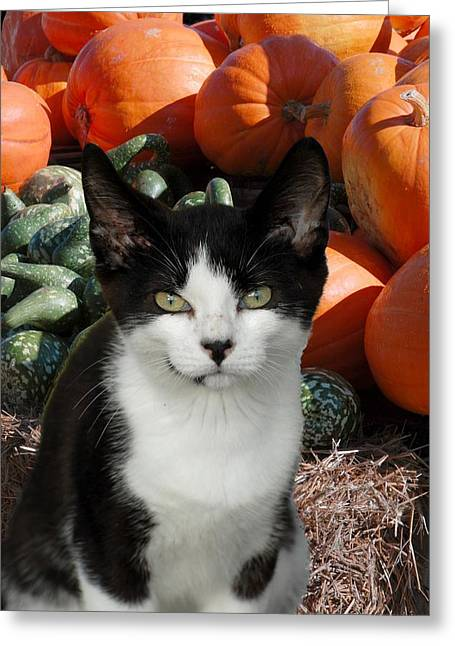 Litter Mates Greeting Cards - Cats 83 Greeting Card by Joyce StJames