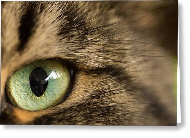 Animal Eyes Greeting Cards - Cats Eye Greeting Card by Shane Holsclaw