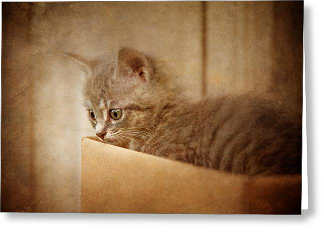 Cardboard Greeting Cards - Cats Eyes #03 Greeting Card by Loriental Photography