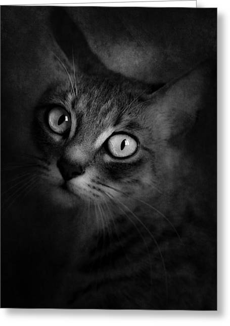 Brightness Greeting Cards - Cats Eyes #06 Greeting Card by Loriental Photography