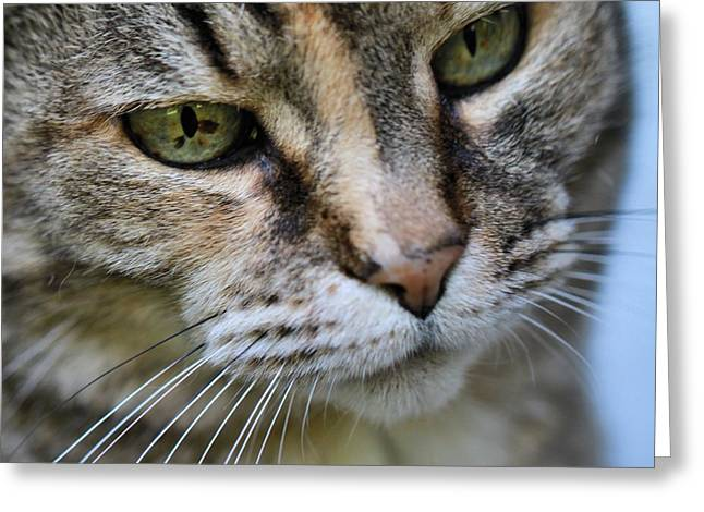 Family Pet Greeting Cards - Cats Eyes Greeting Card by Dan Sproul