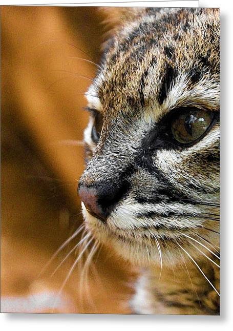 Cat Photo Greeting Cards - Cats Eyes Greeting Card by Martin Newman