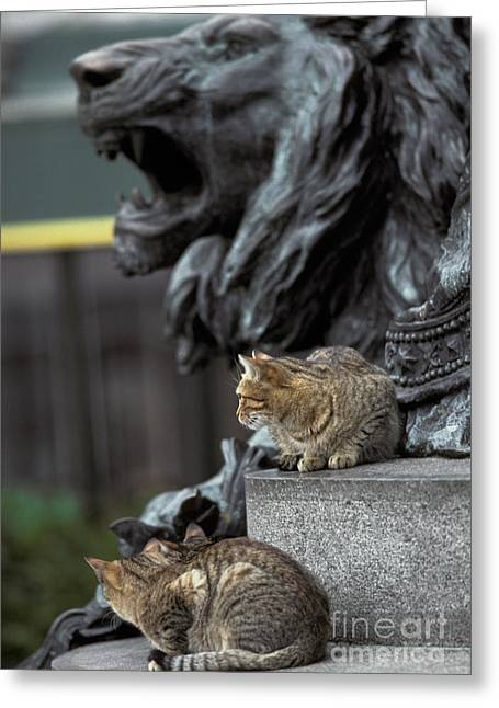 Statue Portrait Greeting Cards - Cats In Venice Greeting Card by Ron Sanford