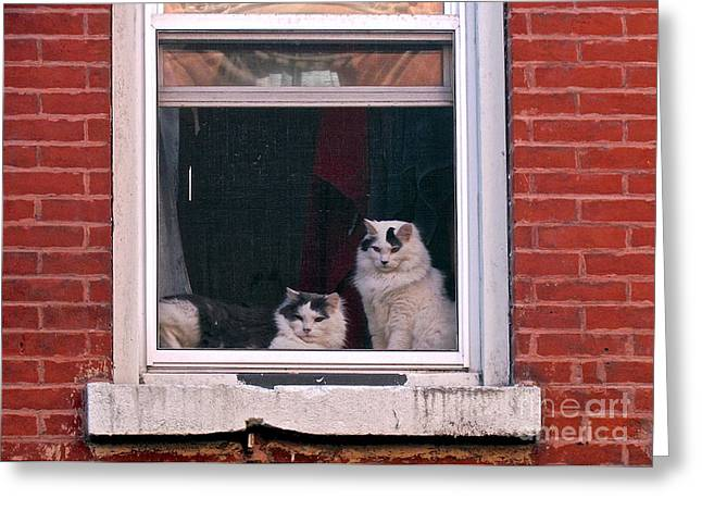 Randi Shenkman Greeting Cards - Cats on a Sill Greeting Card by Randi Shenkman