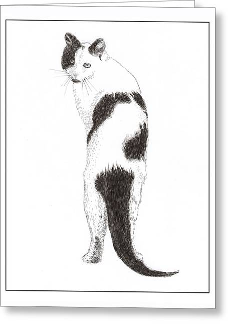 Pen And Ink Framed Prints Greeting Cards - CATS You speaking to ME Greeting Card by Jack Pumphrey