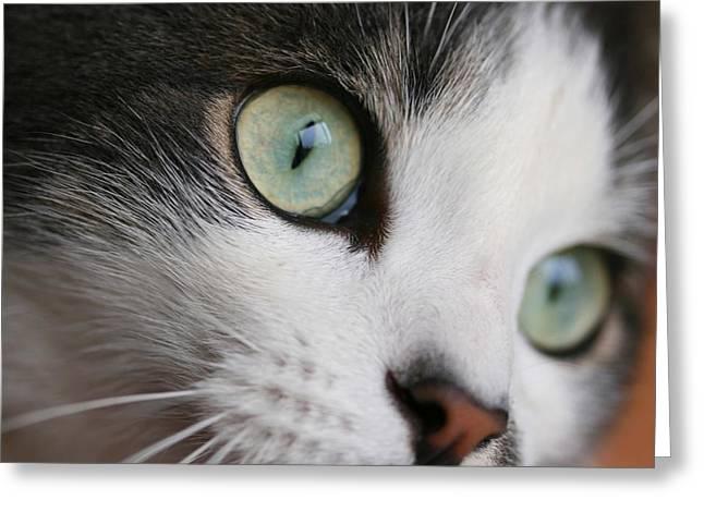 Marble Eye Greeting Cards - CatsEyes Greeting Card by Veronica Vandenburg