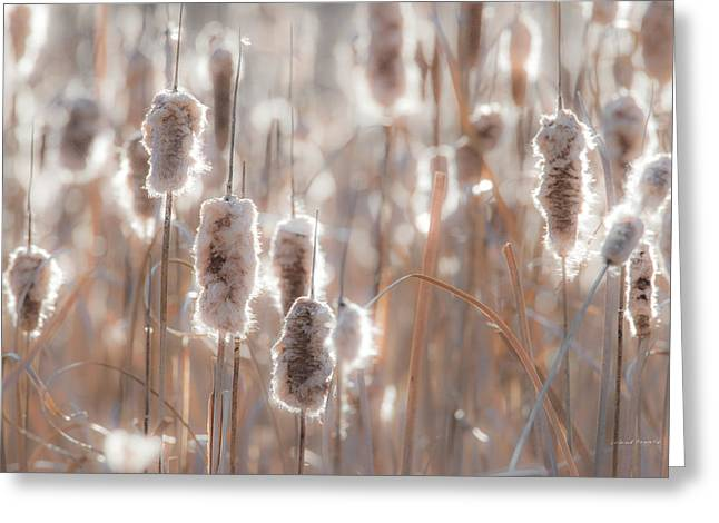 Cattail Light 1 Greeting Card by Leland D Howard