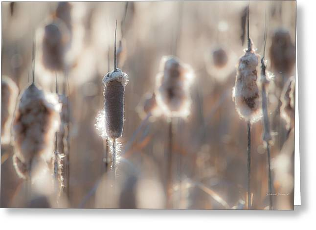 Cattail Light 2 Greeting Card by Leland D Howard