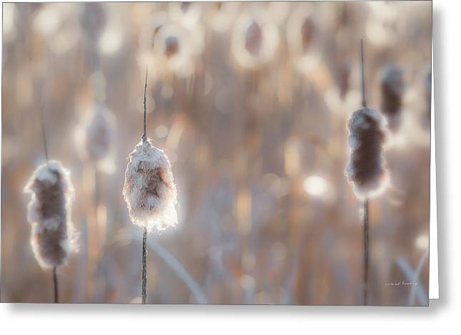 Cattail Light 3 Greeting Card by Leland D Howard