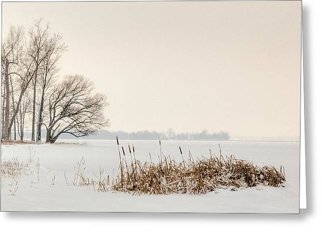 Cattails Greeting Cards - Cattails by the shore in winter Greeting Card by Rob Huntley