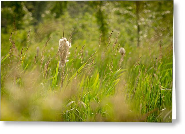 Morass Greeting Cards - Cattails Greeting Card by Chris Cooley