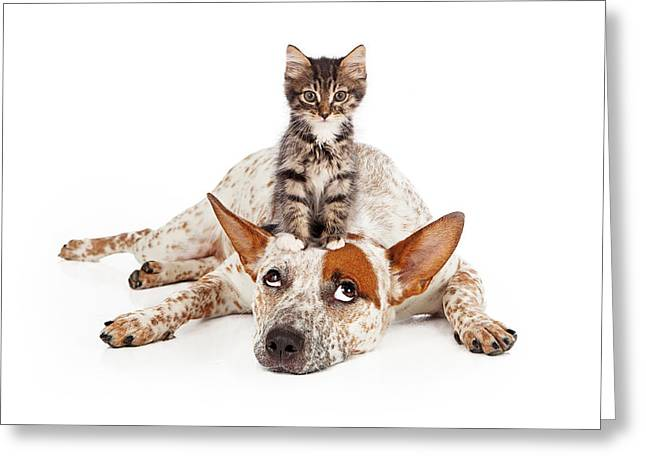 Full-length Portrait Photographs Greeting Cards - Catte Dog With Kitten on His Head Greeting Card by Susan  Schmitz