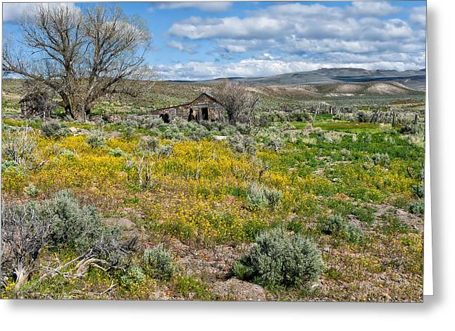 Washoe County Greeting Cards - Cattle Camp Greeting Card by Kathleen Bishop