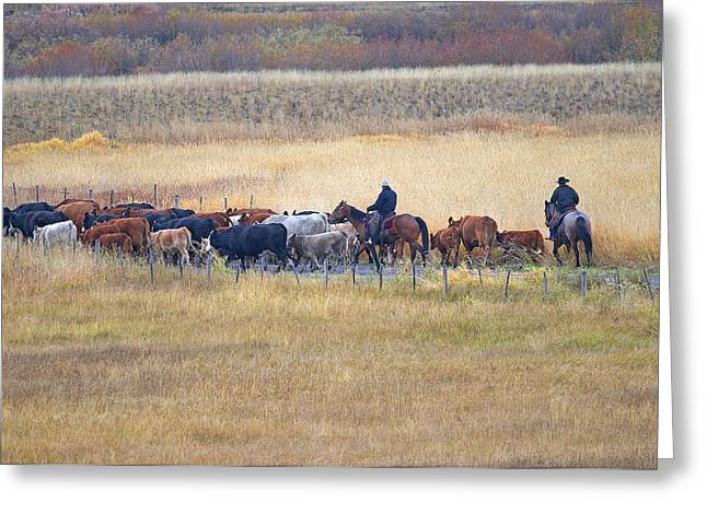 Cattle Drive Photographs Greeting Cards - Cattle Drive 2a Greeting Card by Sharon  Talson