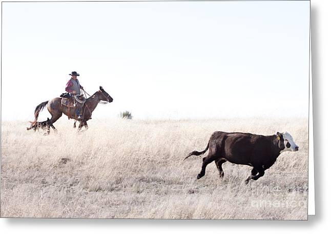 Cattle Drive Greeting Card by Cindy Singleton