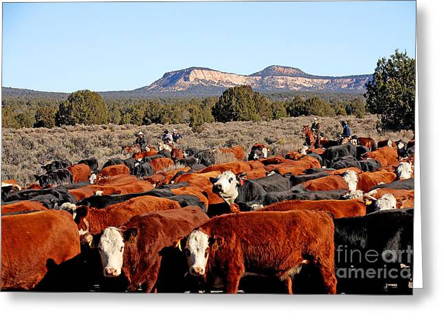 The Horse Greeting Cards - Cattle Drive Greeting Card by John Langdon