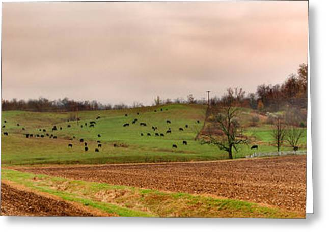 Angus Steer Greeting Cards - Cattle Farm Paint valley  Greeting Card by Randall Branham