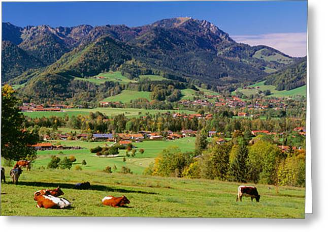 Medium Group Of Animals Greeting Cards - Cattle In A Field With Mountain Range Greeting Card by Panoramic Images