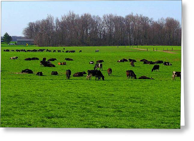 Pond In Park Greeting Cards - Cattle Land Greeting Card by Tina M Wenger