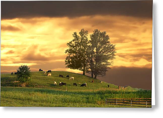 Randall Branham Greeting Cards - Cattle on a Hill Greeting Card by Randall Branham