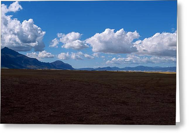 Cape Town Greeting Cards - Cattle Pasture, Highway N7 From Cape Greeting Card by Panoramic Images