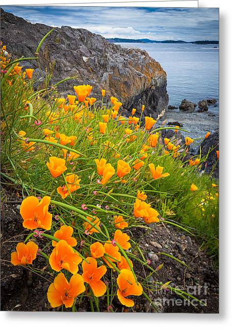 Coastline Flowers Greeting Cards - Cattle Point Poppies Greeting Card by Inge Johnsson