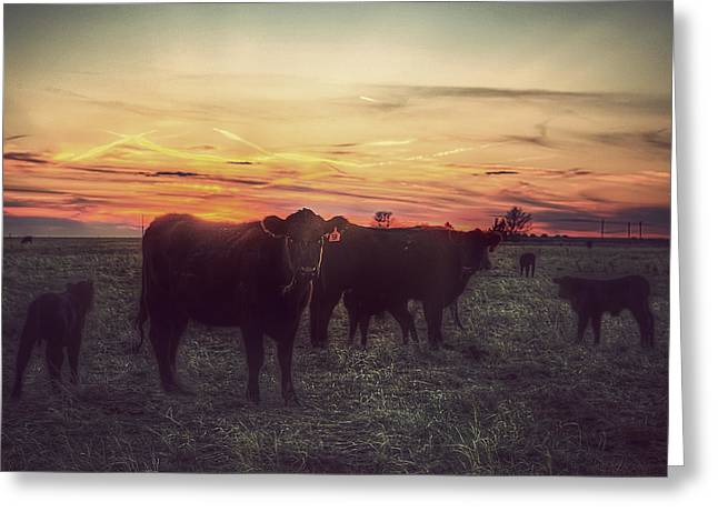 Grasslands Greeting Cards - Cattle Sunset Greeting Card by Thomas Zimmerman