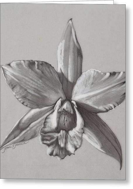 Cattleya Orchid Greeting Cards - Cattleya II - Iwanagara Greeting Card by Joan Garcia