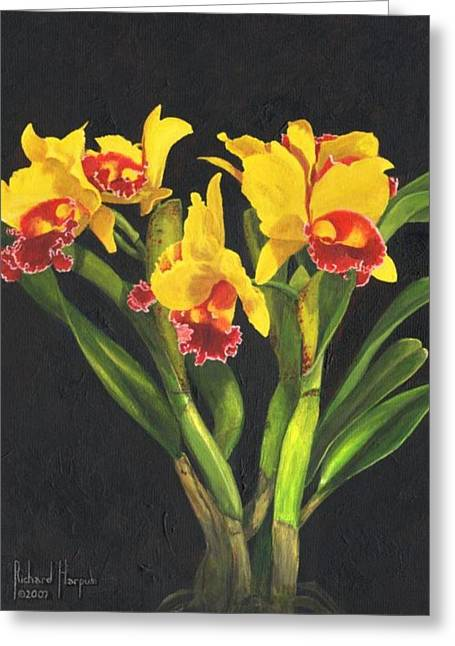 Cattleya Orchid Greeting Cards - Cattleya Orchid Greeting Card by Richard Harpum