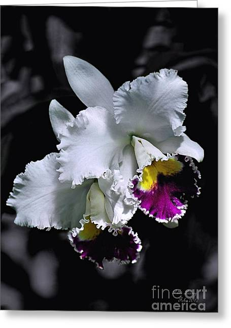 Flovers Greeting Cards - Cattleya Greeting Card by Peter Lessey