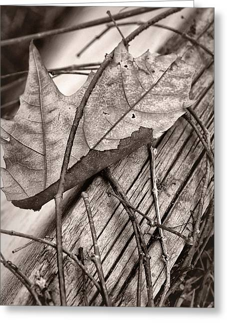 Brown Tones Greeting Cards - Caught #2 - Dried Leaf - Sepia Greeting Card by Nikolyn McDonald