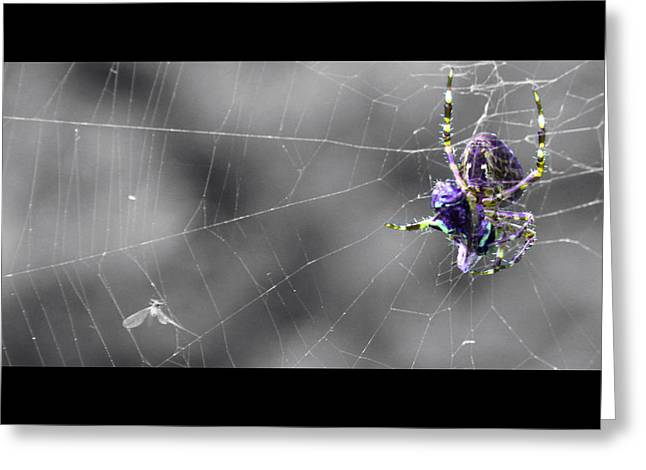 Spider And Fly Greeting Cards - Caught Greeting Card by Jeff Anderson