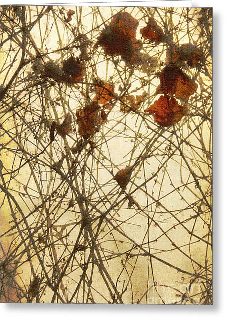 Tendrils Greeting Cards - Caught Greeting Card by Margie Hurwich