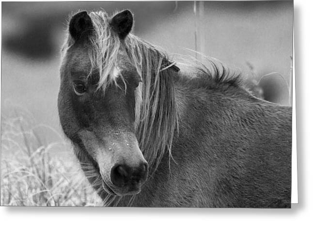 Head-shot Greeting Cards - Caught My Eye Greeting Card by Betsy C  Knapp