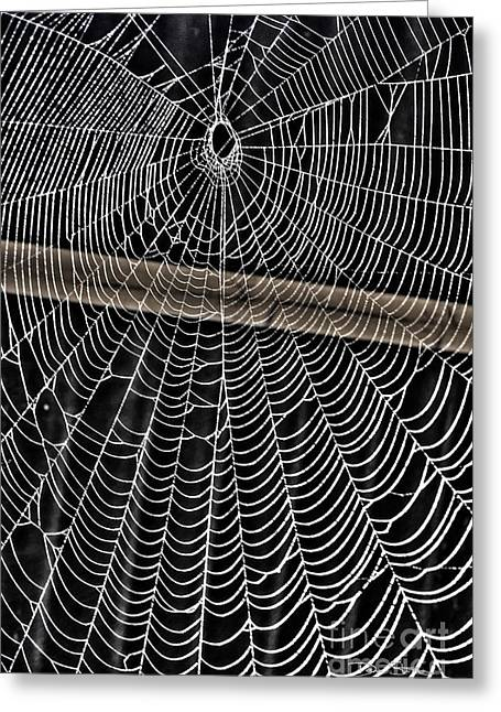 Sloth Digital Greeting Cards - Caught Up in Various Webs Greeting Card by Dan Stone