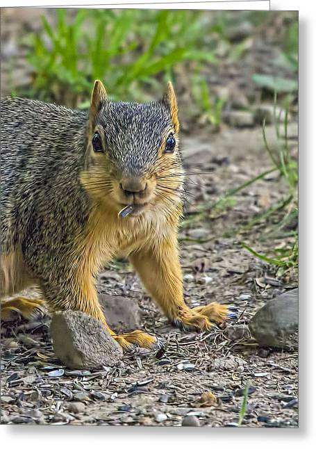 Fox Squirrel Greeting Cards - Caught Ya Greeting Card by Andrew Lawlor